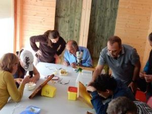 """Ausbildungsprogramm des IVW: """"Praxisseminar imkern"""" wegen Corona gestoppt"""