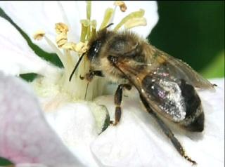 Warum sie heimischen Honig kaufen sollten