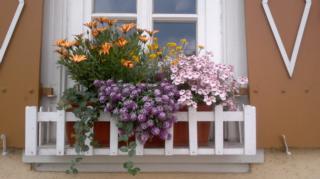 Balkon und Fensterbrett als Bienenweide