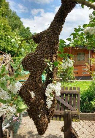 Bienenschwärme melden – 01771671175