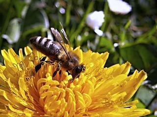 """Neues Projekt: Der """"Schmetterlings- und Bienengarten"""""""