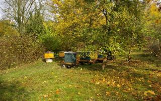 Bienenlehrpark Aukamm