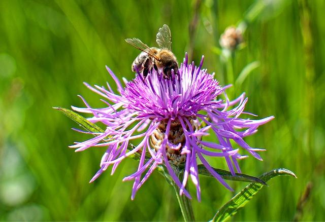 Weitere Wildbienen-Infos