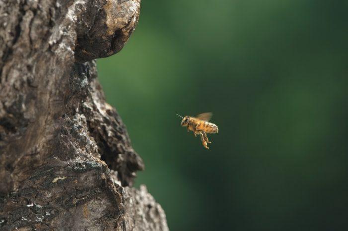 """""""Tagebuch einer Biene"""""""